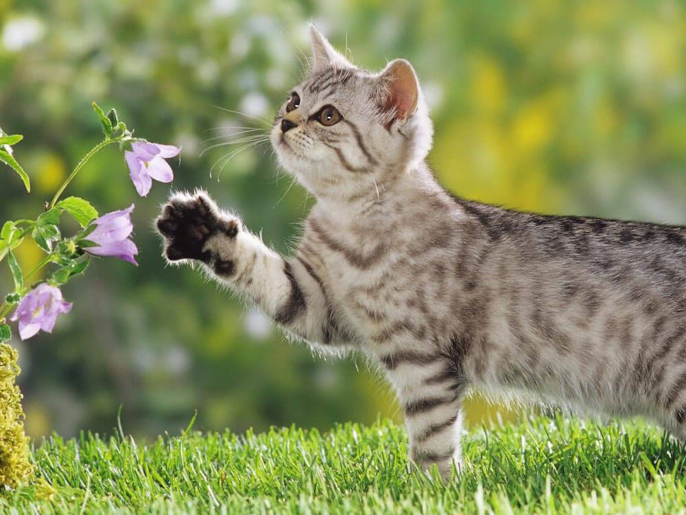Cat, one of the best pet for kids