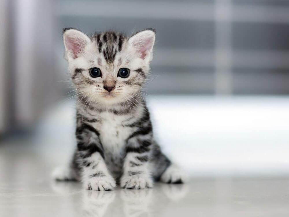 an adorable kitten sitting on the floor