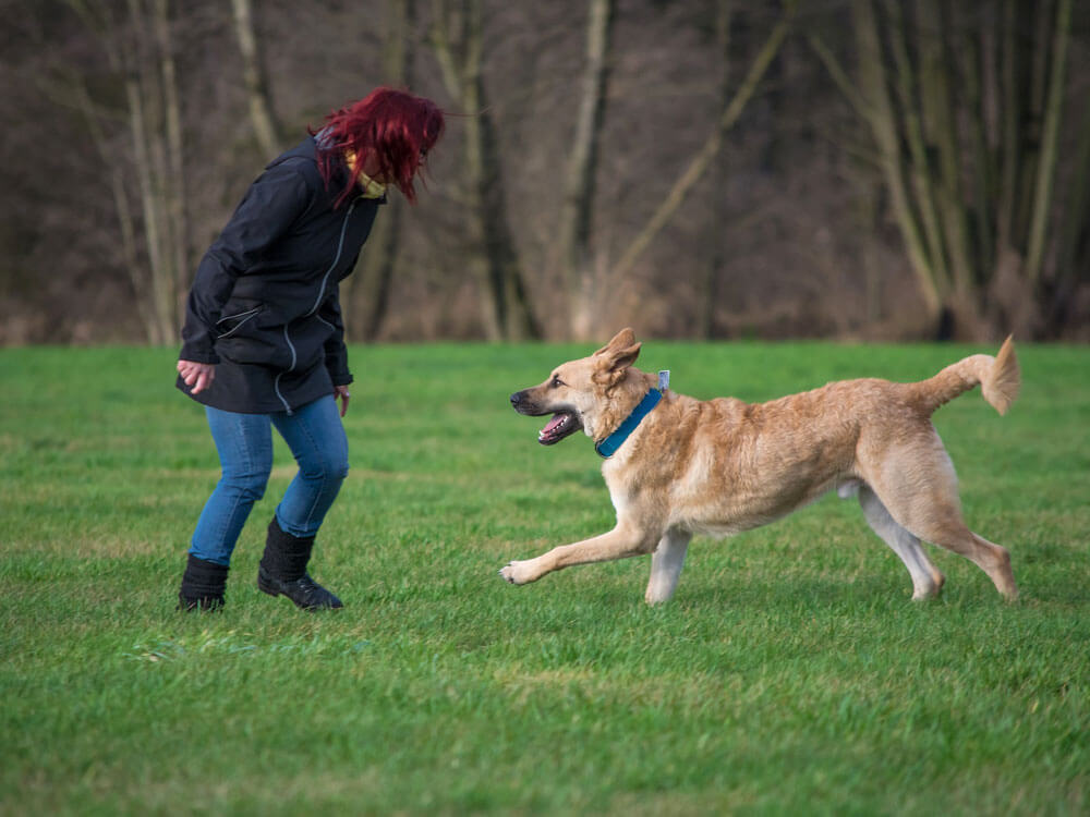 A special bond between dog and its owner after an agility training