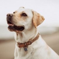 Why Is My Dog Coughing? Here Are 7 Possible Causes