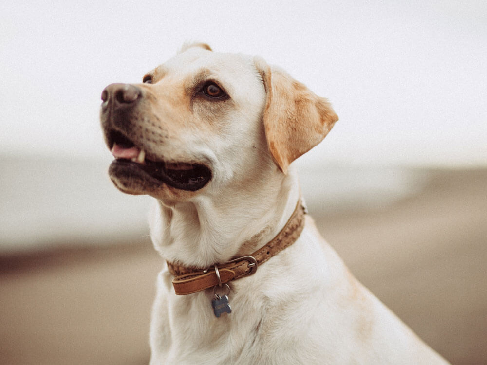 Dog coughs with possible different symptoms