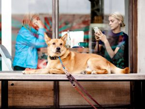 Wetherspoon Bans Dogs in All Pubs Across the UK
