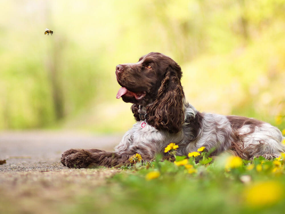 dog staring to a bee