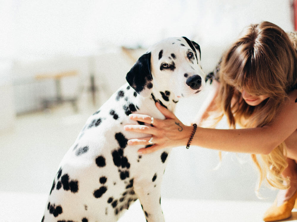 A dog needs assistance by its owner due to hip dysplasia