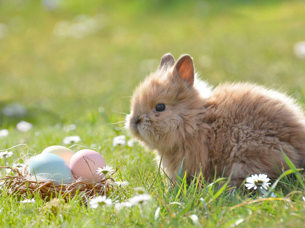 a bunny sitting beside with an easter eggs