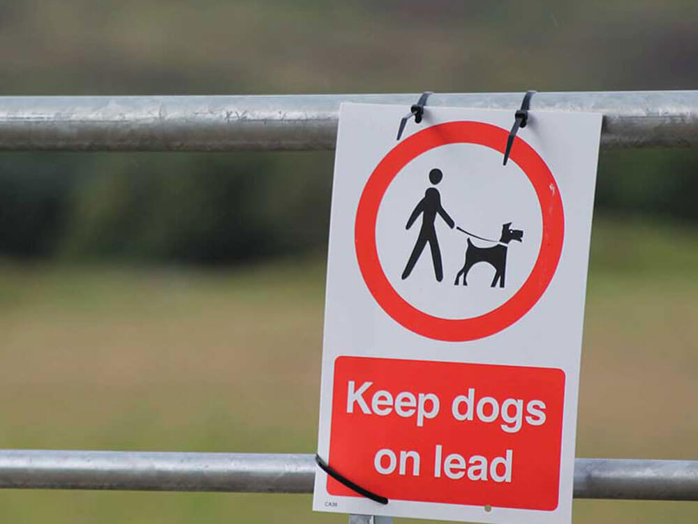 A warning message to take lead on dogs from attacking sheep