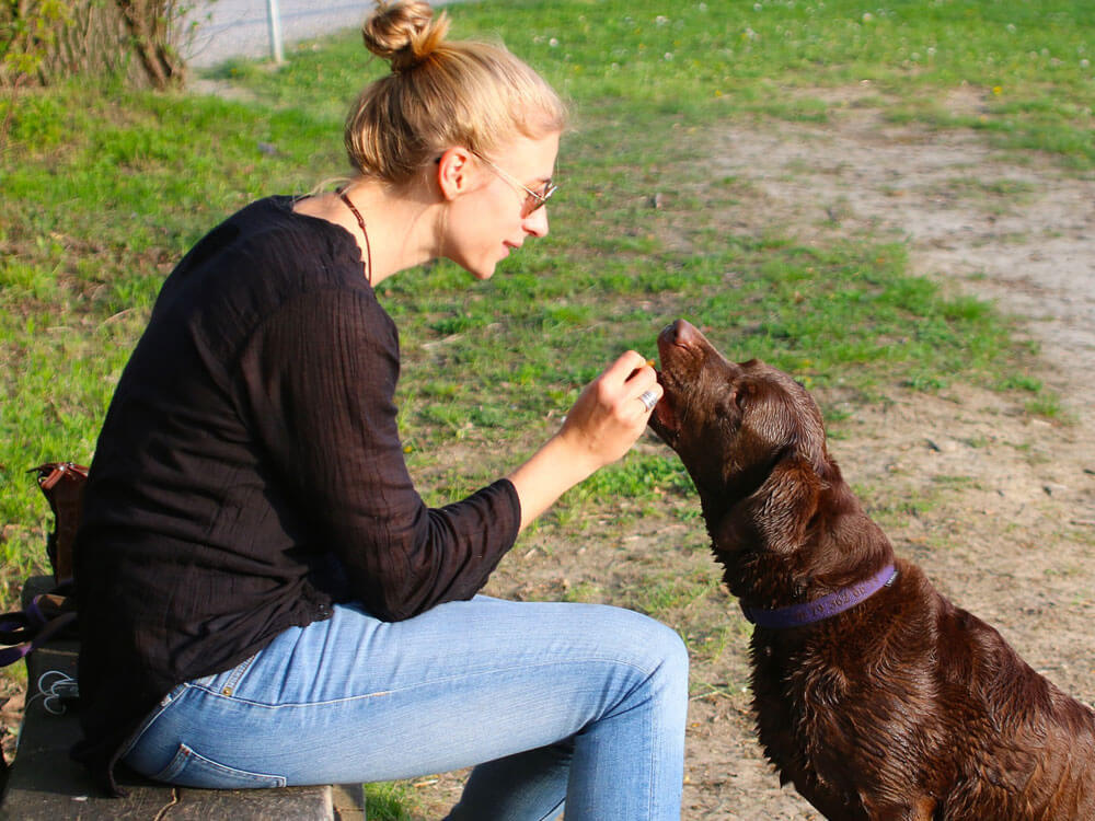 An obedient dog receives a treat or reward from its owner