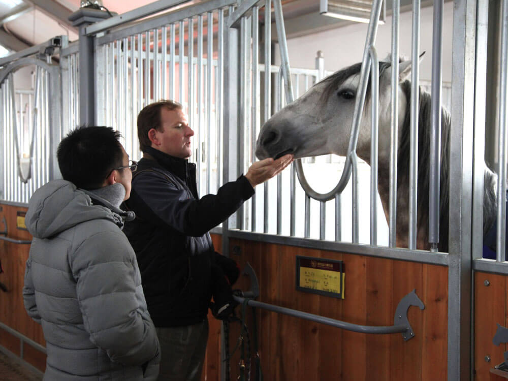 a man asking about the horse's history from its owner