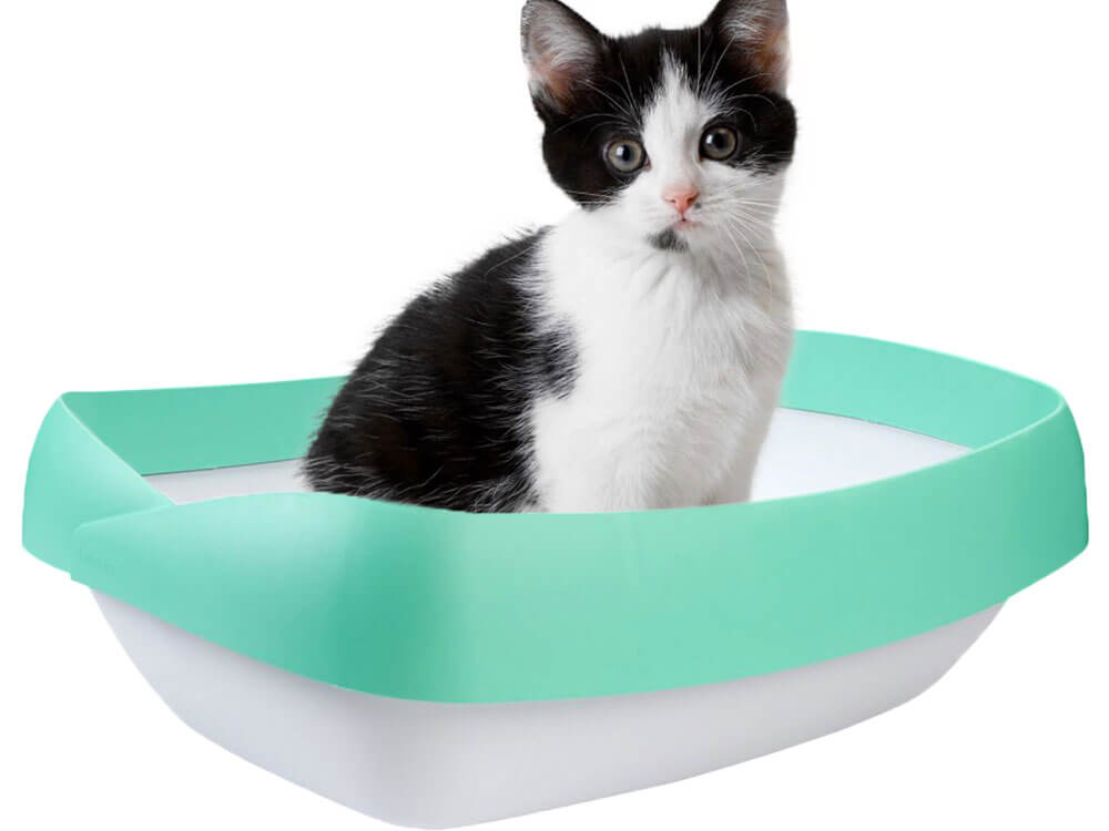 a kitten trained to recognize its litter box