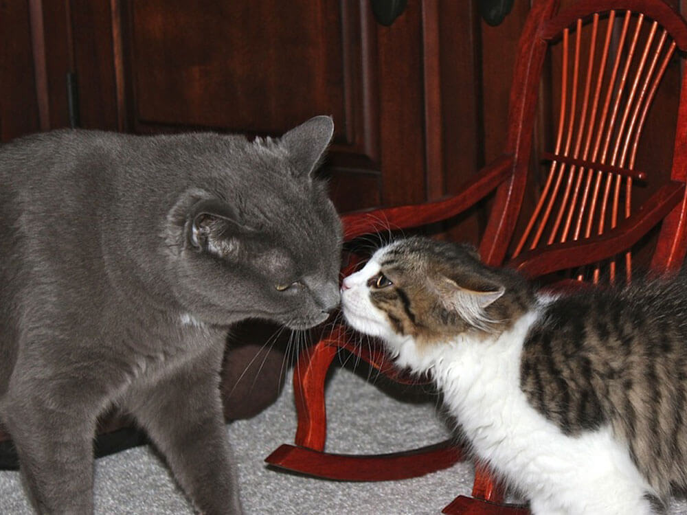 A cat and kitten in a face-to-face interaction