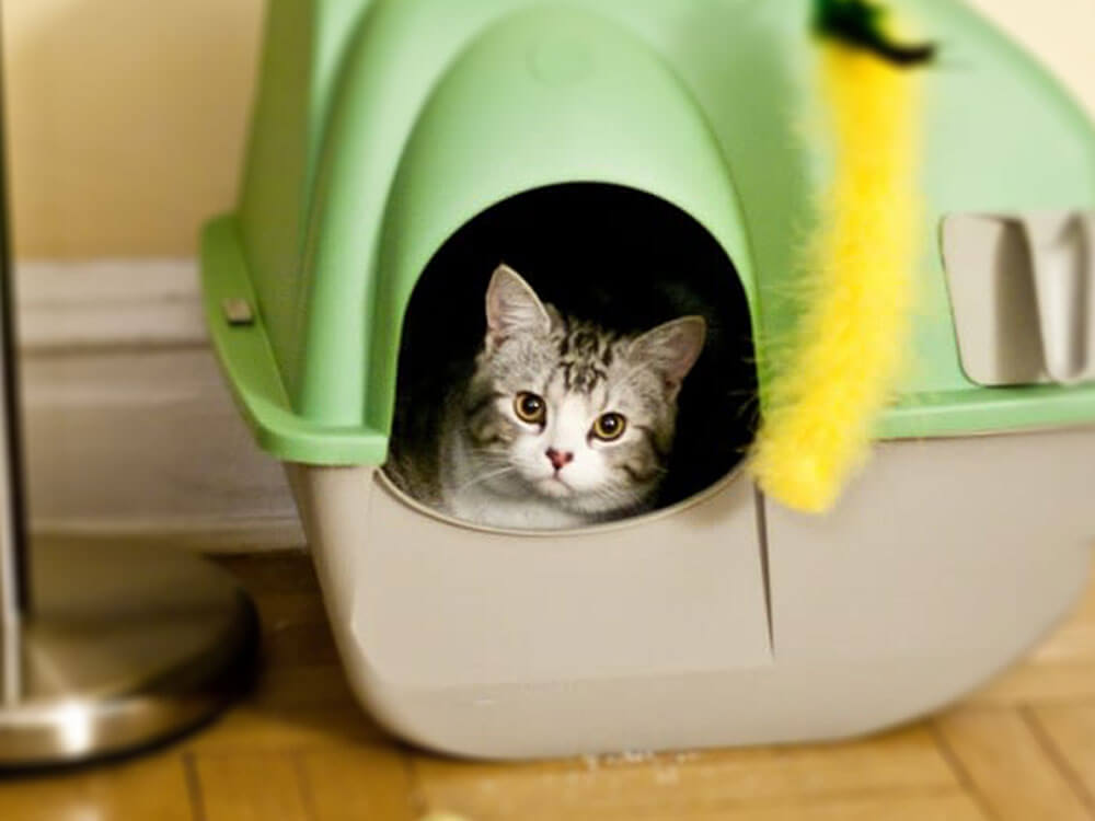 a kitten trained to use its litter box