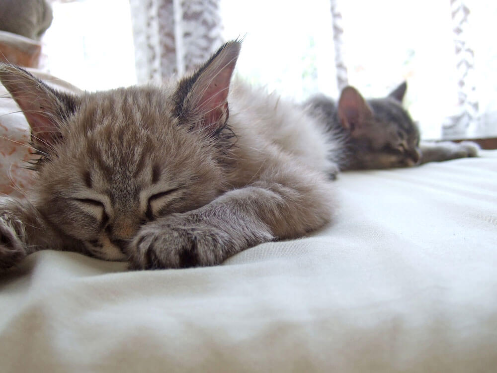 A cat and kitten separately sleeping