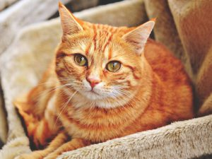 Why the Tabby Cat Might Be the One for You?