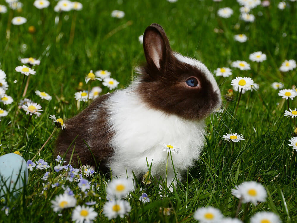 a rabbit breathing in some bits of the grass may result to sneezing