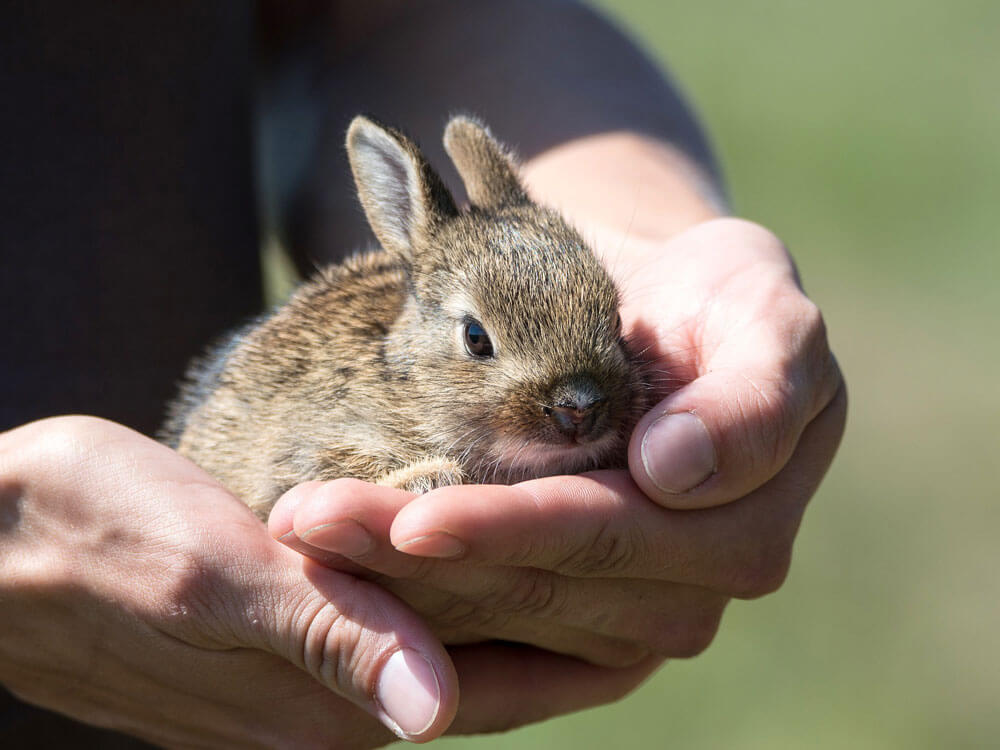 a bunny carried properly by its owner