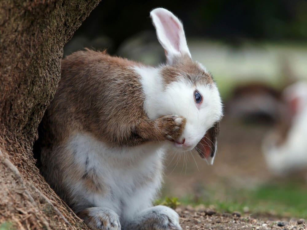 a rabbit eating beside the tree