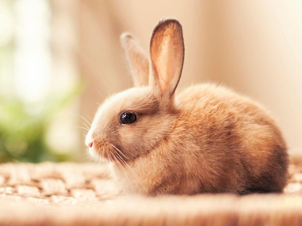 a rabbit with sneezing symptoms