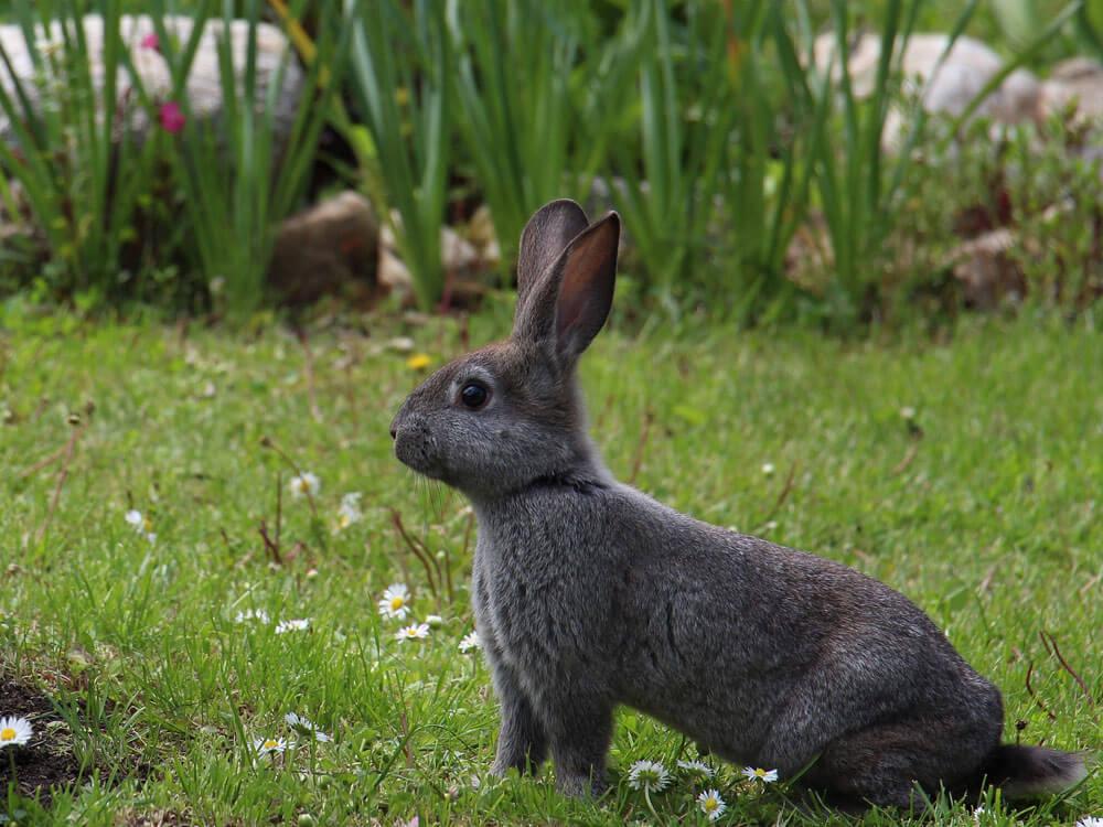 A rabbit walking around in a large space garden