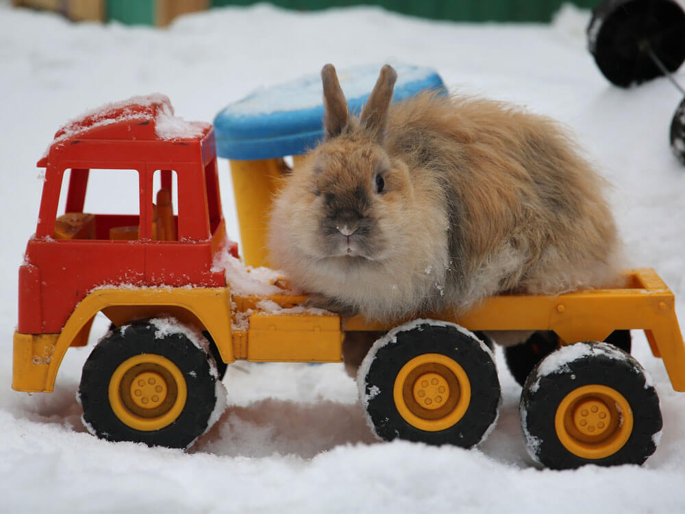 a depressed bunny playing with a toy car