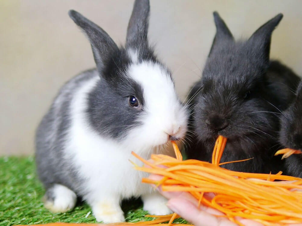 Bunnies eating fresh, healthy food such as carrot