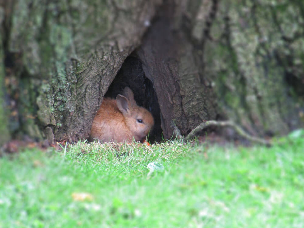 a scared bunny hiding inside a tree hole