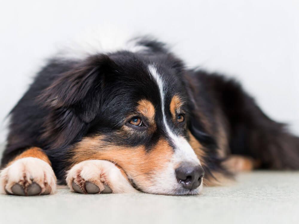 Dog Vomit