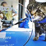 Tara from Bakersfield, California won 'Hero Dog' Award