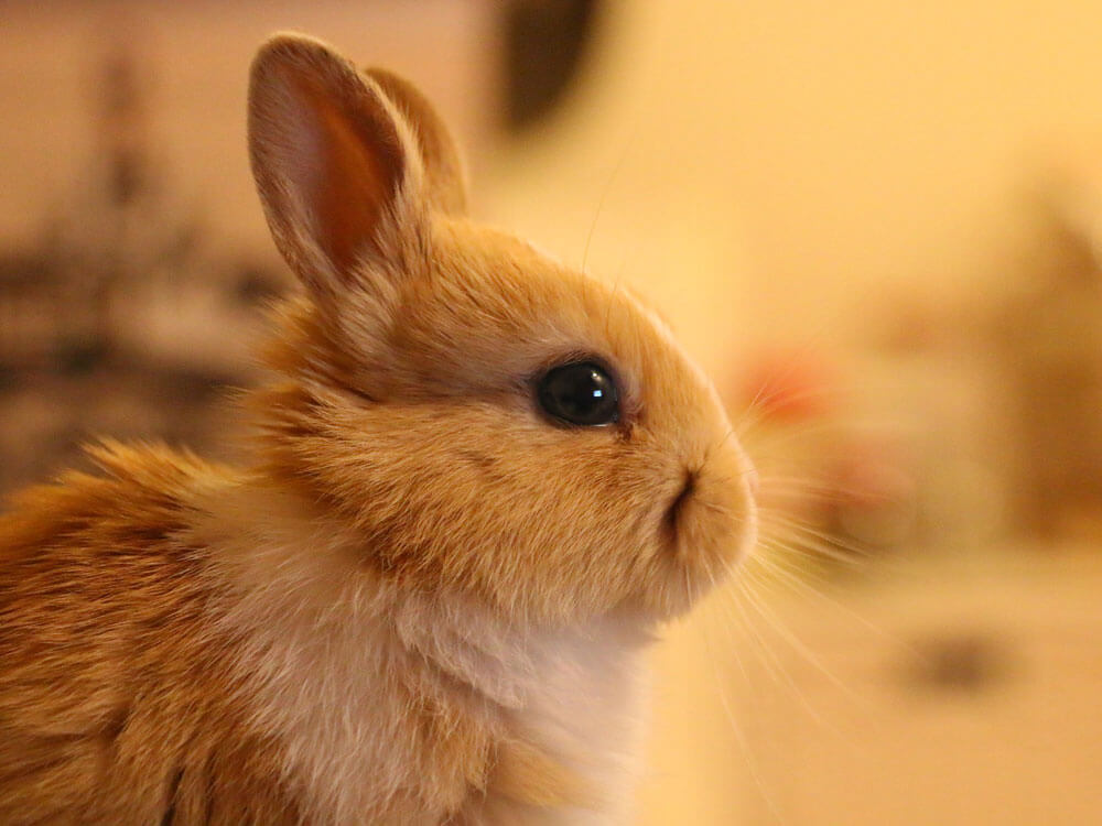 a bunny with teary eyes and runny nose