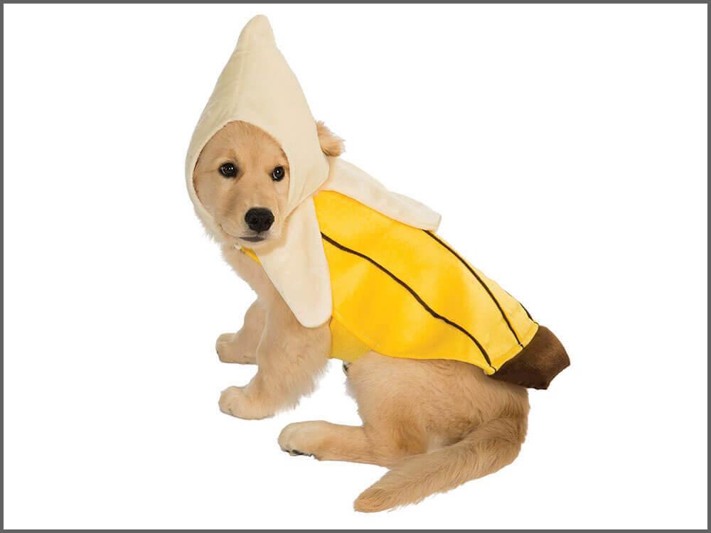 a walking fruit dog wearing a banana dog costume