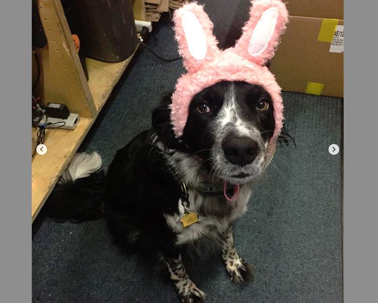 a dog in a grumpy bunny look
