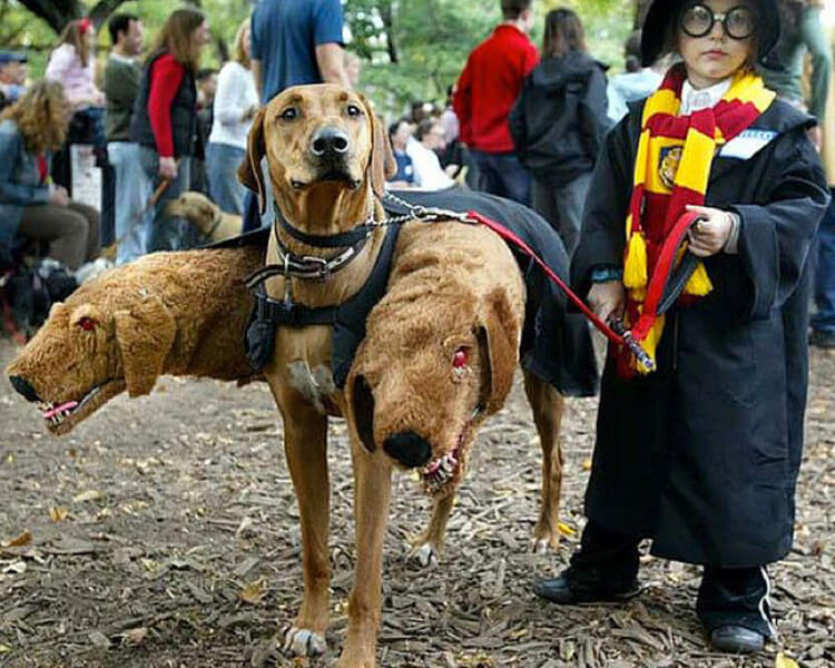 a little kid as harry Potter and his dog as Fluffy