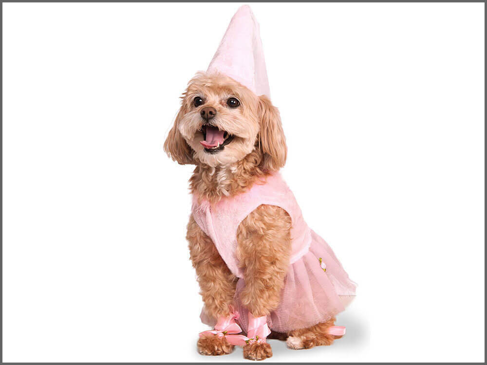 a dog wearing a princess dog costume