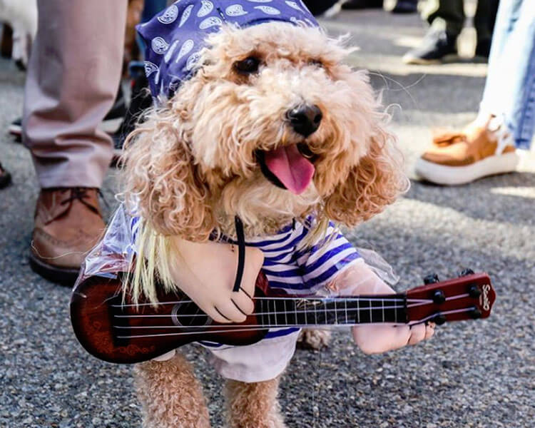 a puppy rocks in a guitar costume