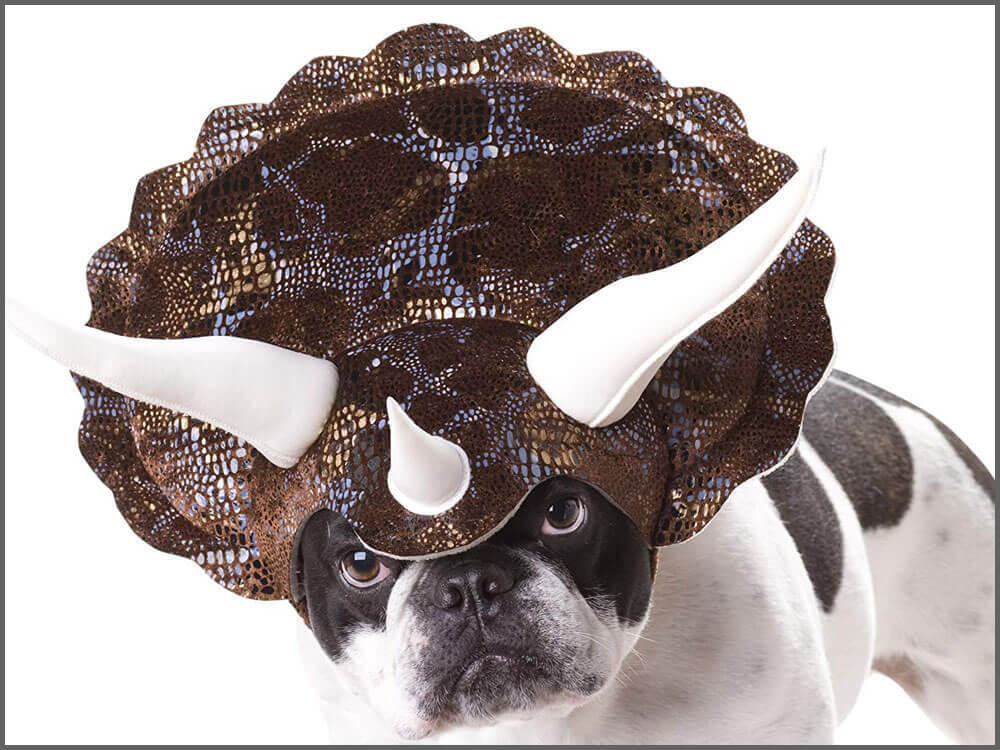 a dog wearing a triceratops horned headpiece