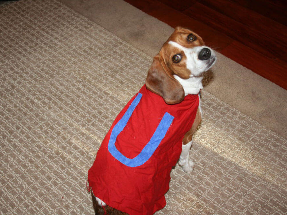 an underdog costume perfect for Halloween