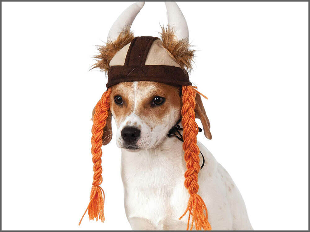 a dog in a bulky costume wearing a Viking hat with braids
