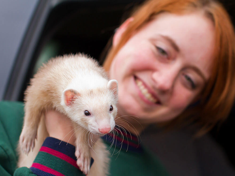 a woman holding a ferret