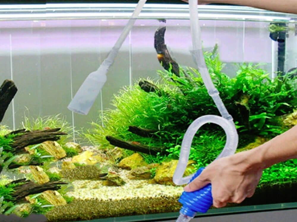 an aquarium cleaner helps to remove algae