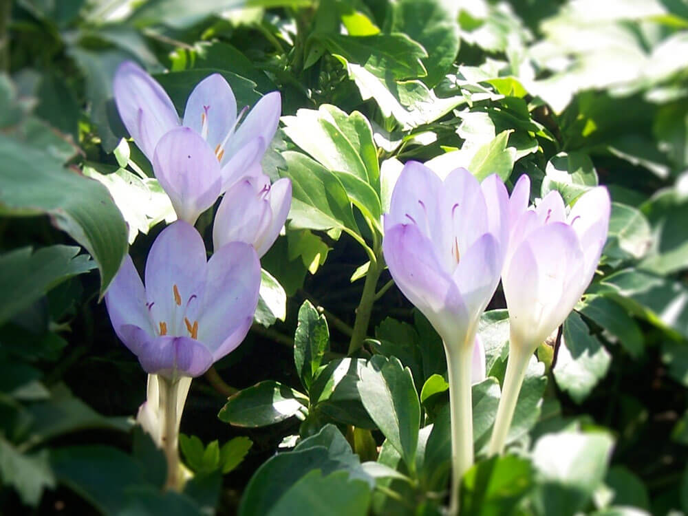 a bach flower helps cats to relieve stress