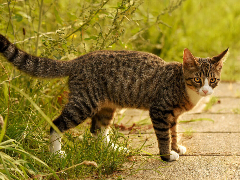 a cat walking after spraying outside