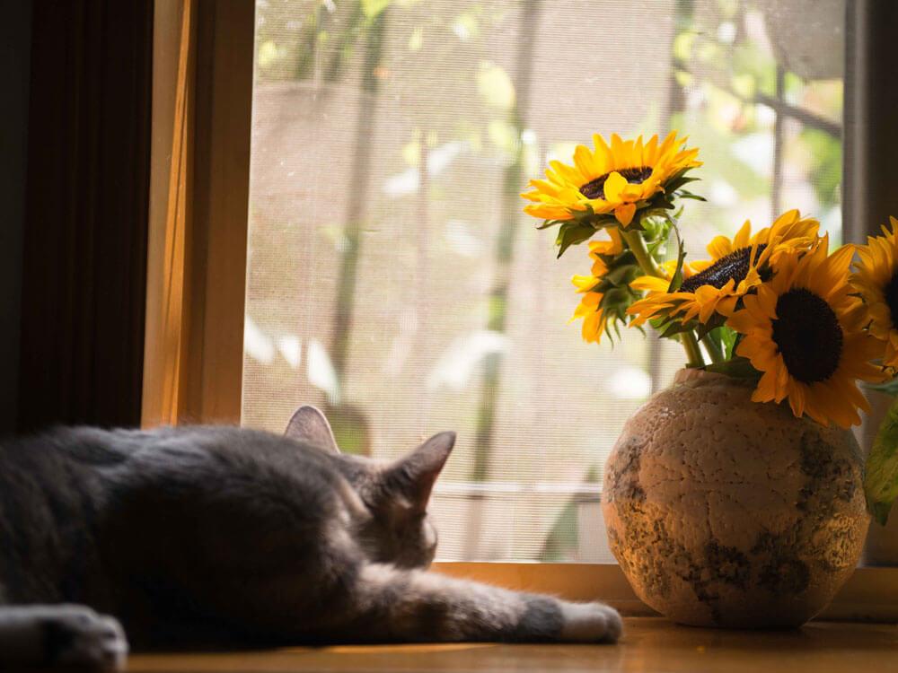 cat lying down near the window