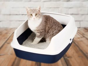 Which One Is the Best Cat Litter for Your Cat?