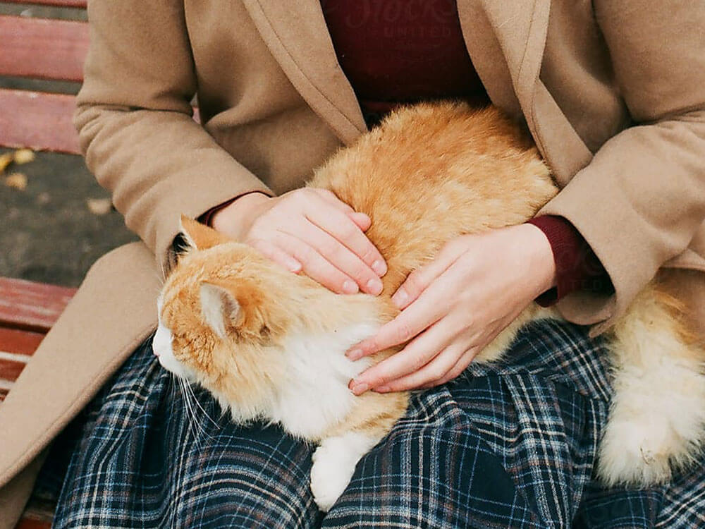 a cat sitting in a womans lap