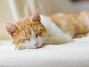 Cat Constipation: Causes and Treatments