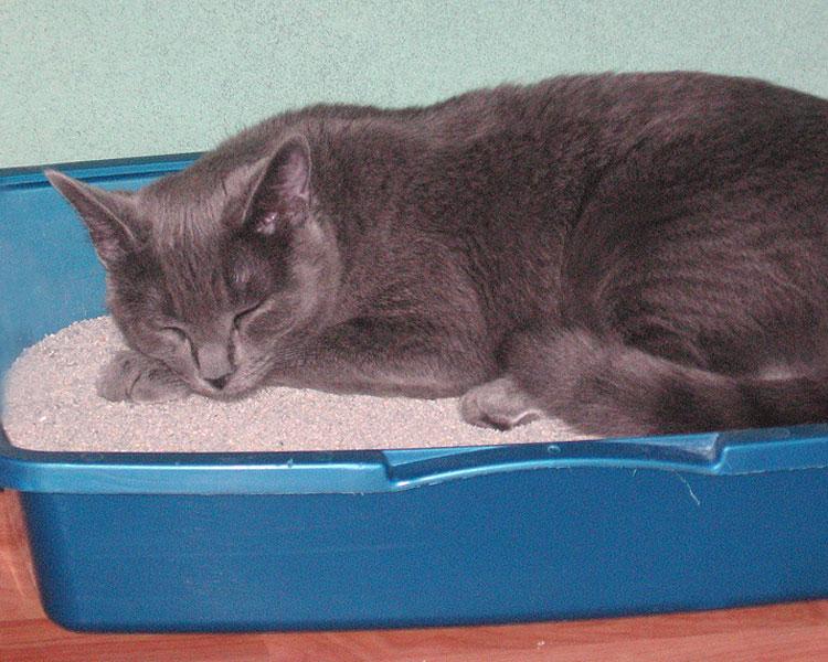 cat sleeping in a cat litter box