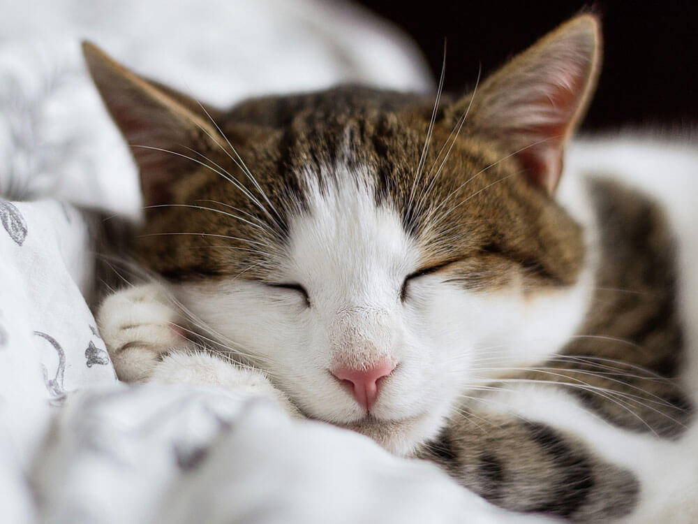 a cat sleeping calmly in its bed