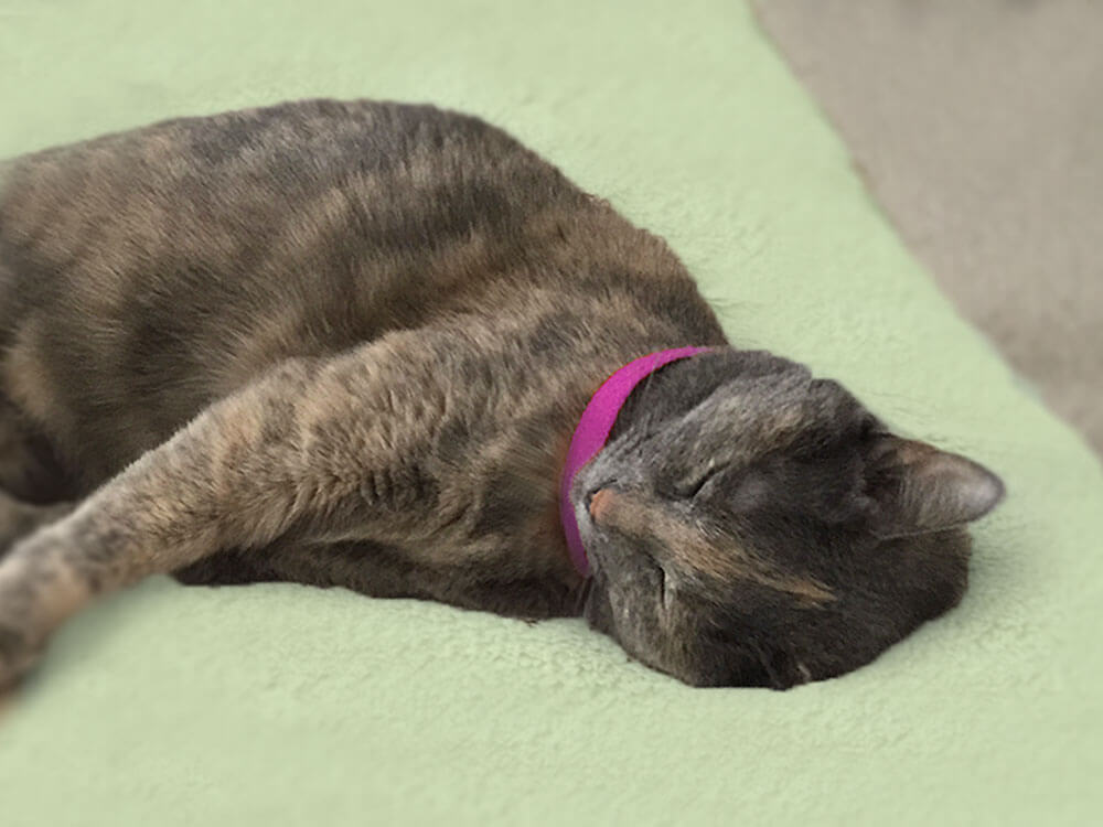 a cat sleeping with a calming collar