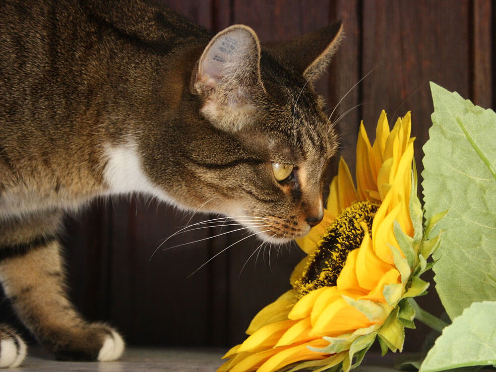 a cat caught an allergy after it smelled a flower