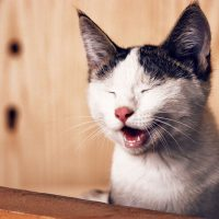 Cat Bad Breath: Causes and Prevention