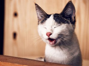 Cat Bad Breath - Causes and Prevention